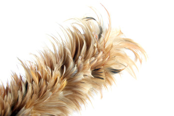 Feather soft duster isolated.