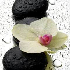 White orchid with zen stones