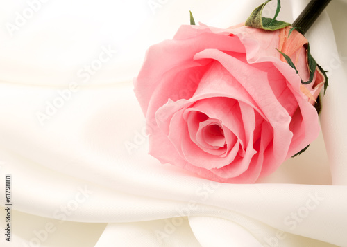 Foto op Canvas Madeliefjes beautiful close up rose