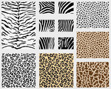 Illustration of detailed different animal skins, vector