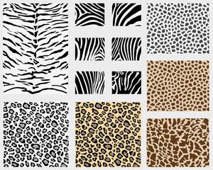 Illustration of detailed different animal skins, vector