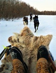 Huskie Sleigh Ride in Arctic Norway