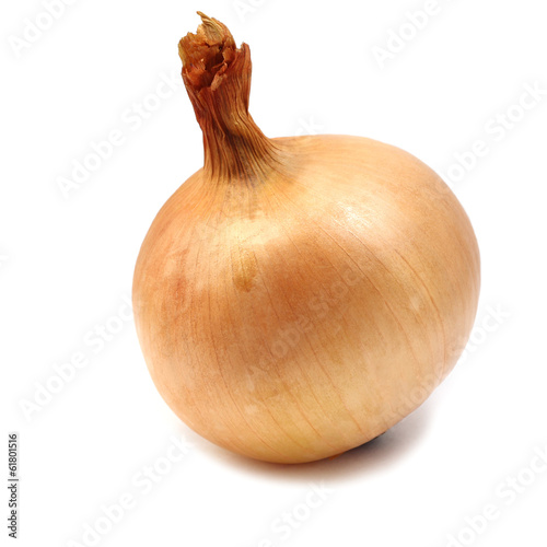 large onion on white background