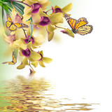 Fototapety Floral background of tropical orchids and  butterfly