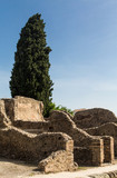 Cypress Tree Over Old Stone Wall in Pompeii