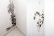canvas print picture - Schimmel in einer Wohnung