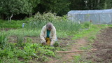 grandmother grub weeds by hand kneeling between beds