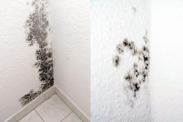 Schimmel in einer Wohnung