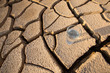 A Glass Of Water On Parched Soil