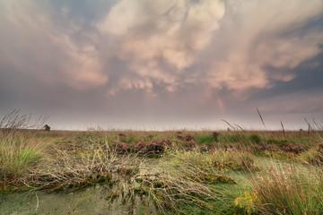 mammatus clouds over swamp at sunset