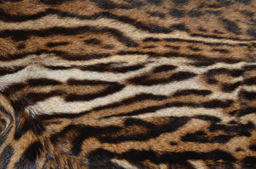 closeup of canadian lynx fur