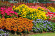 colorful flowers in the garden, flower garden background