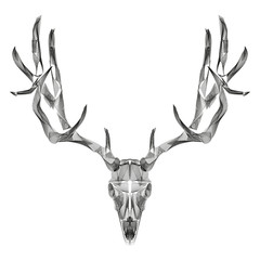 abstract animal background line art