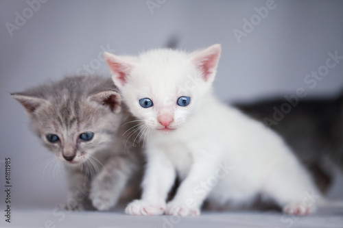 Two adorable kittens