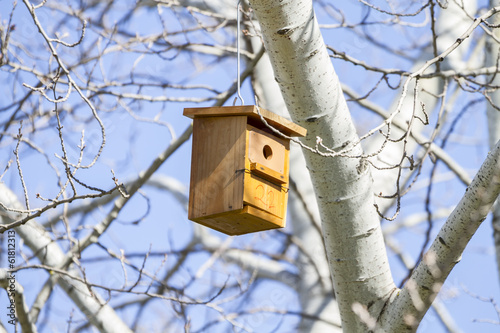 Bird house on the tree  in the summer woods