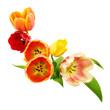 Verzierung aus Tulpen