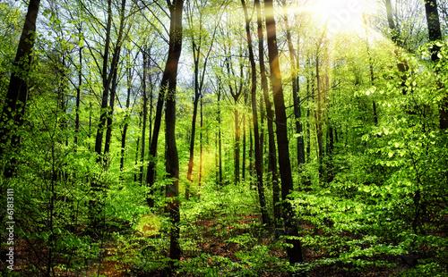 wiosna-slonce-w-bukowym-lesie