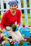 Gardening - woman planting flowers in the garden