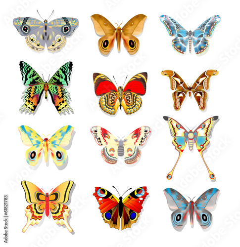 set of colorful butterflies on a white background