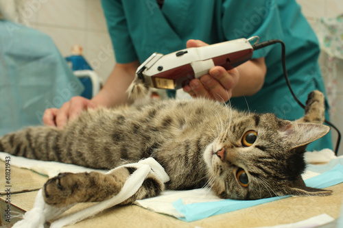 Papiers peints Chat Veterinarian's office, during surgical operation of cat.