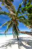 Beautiful palm on white beach, Boracay island