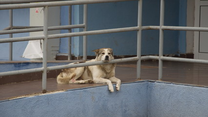 Stray dog taking a rest