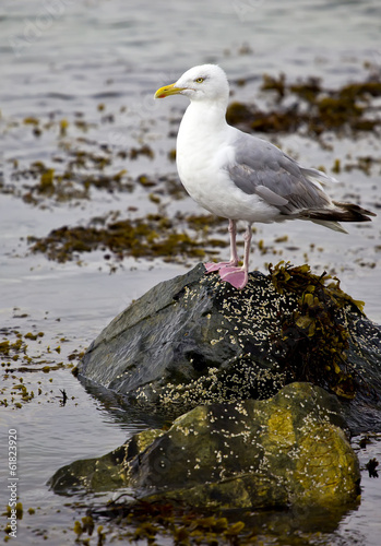 Gull on shore rocks