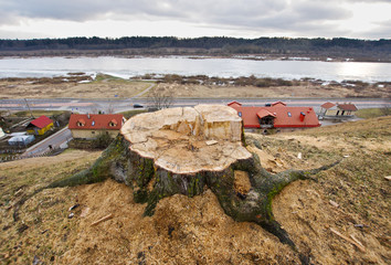 Deforestation problem idea, urban issue
