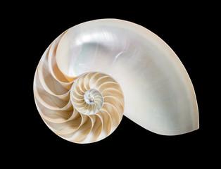 Nautilus vor schwarzem Hintergrund