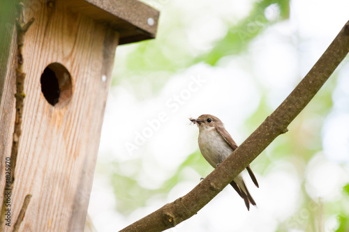 Small bird with food in front of bird home