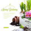 spring gardening concept with fresh flowers and copyspace