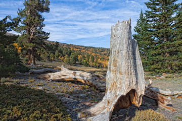 NV-Great Basin National Park