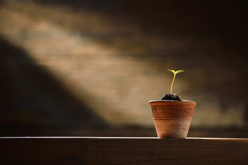 Young plant in the morning light on old wooden background