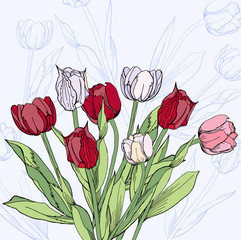 Background with claret and white tulips.Vector illustration