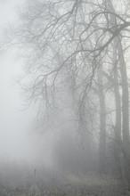 drzewa w lesie misty