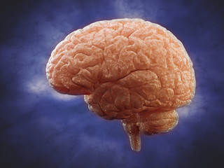 Brain side view
