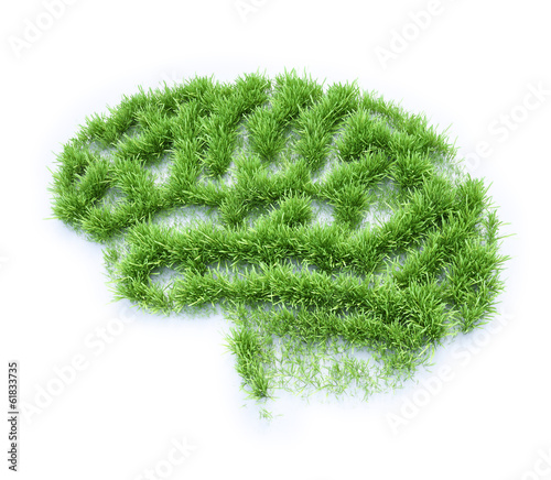 Brain shaped grass patch