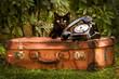 valigia gatto telefono vintage