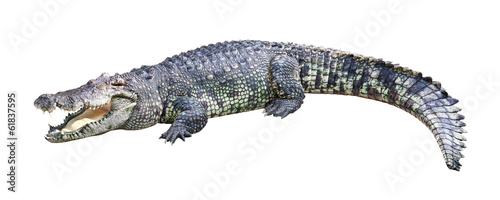 Foto op Aluminium Krokodil Crocodile isolated