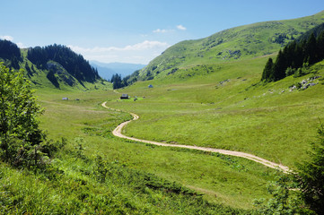 "Sinuous Trail In ""Biogradska Gora"" National Park, Montenegro"
