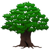 Vector illustration. Big old oak tree on a white background