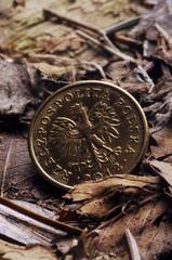 Polish złoty  زلوتي بولندي Польский злотый 波兰兹罗提