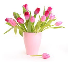 pink freshness