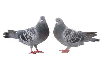 two  dove