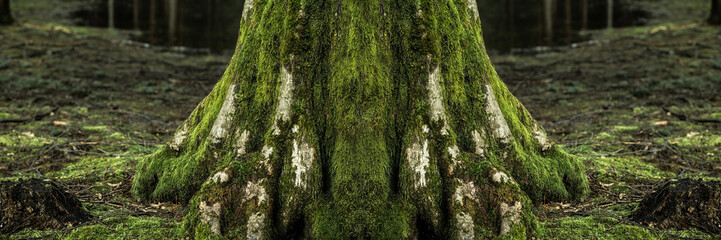 Big tree trunk in forest