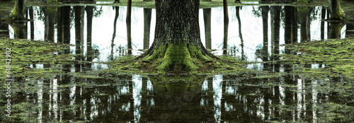 Reflections of trees in flooded forest