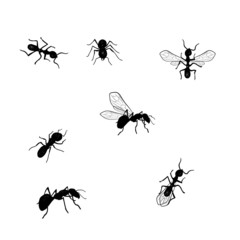 Vector collection of various positioned doodle ants isolated