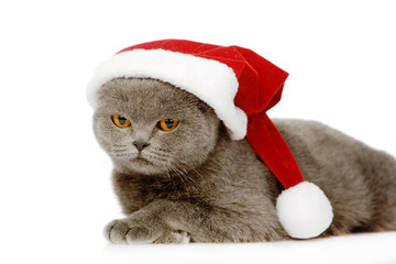 British shorthair cat with santa hat. isolated on white