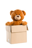 teddy bear in paper box