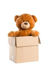 teddy bear in paper box